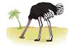 Ефект страуса
