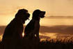 Що спільного між хорошим клієнтом та собакою?