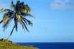 Притча: Камінь, пальма і глибокі коріння