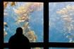 Погляд із того боку акваріуму