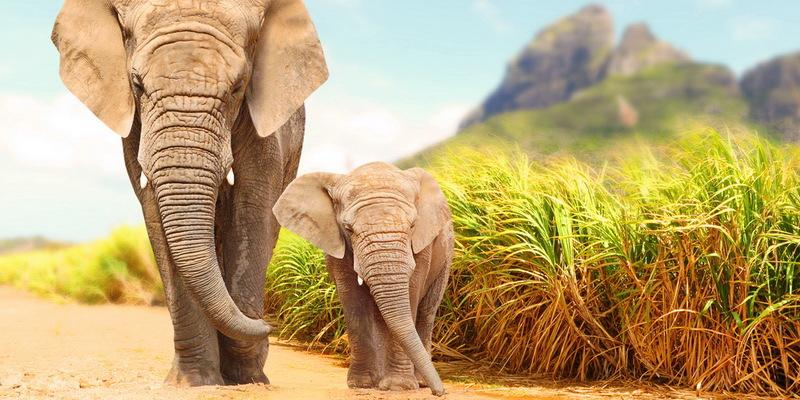 Притча: Слон і мотузка