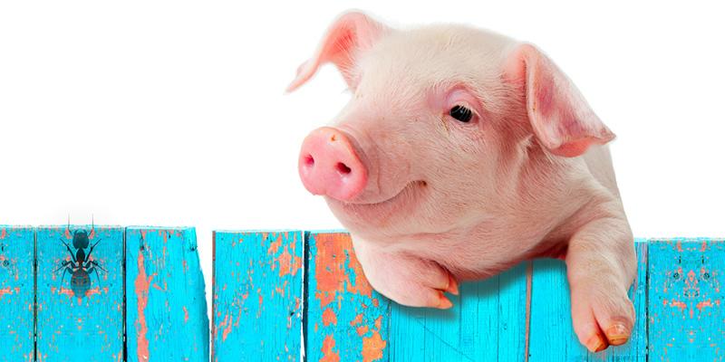 Байка: Мурашка і Свиня